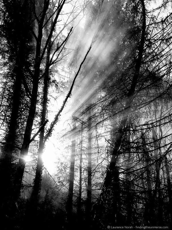 Smoke through the trees