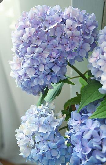 6a00e39334a3d18834013485c37325970c-500wi pretty petals