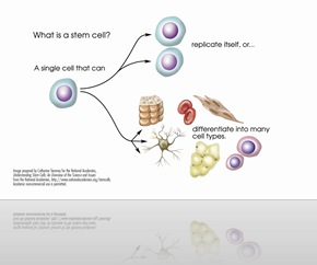 stem-cell-explained