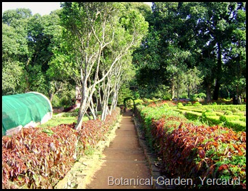 Botanical Garden, Yercaud