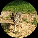 Image Google de la Louvette