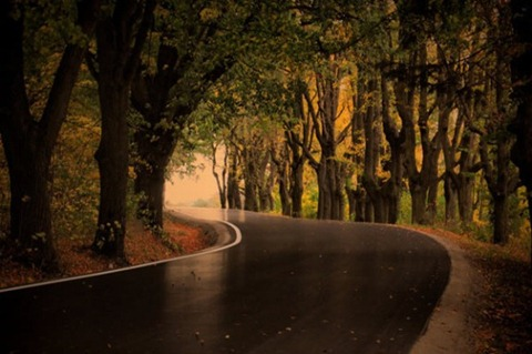 Glossy-Autumn-Road