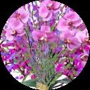 gillet rose