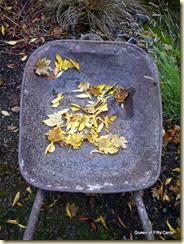 antique wheelbarrow with leaves