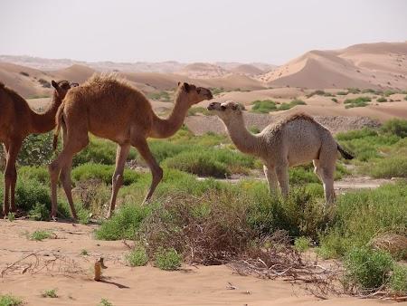 06. Camile in desert.JPG