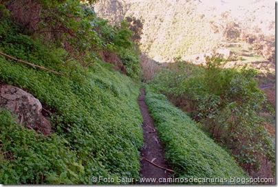 7167 Los Tiles-Firgas(Camino a San Fernando)