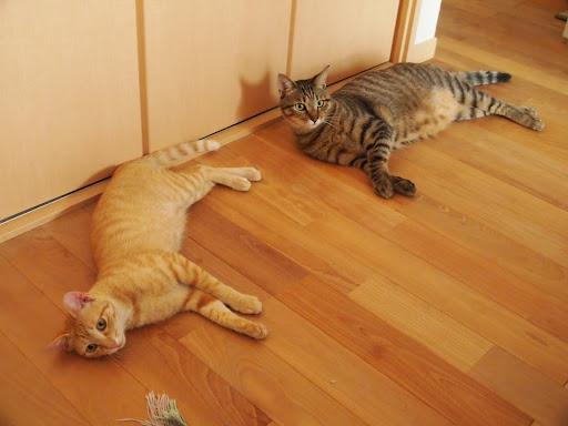 [写真]だいたいベッドルームの床でだらーんとのびている