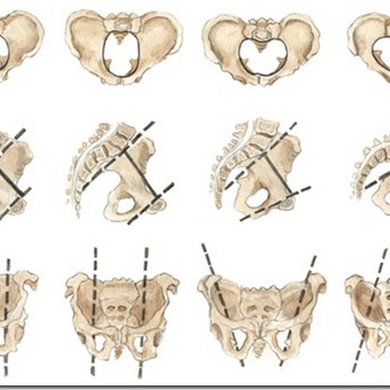 Types of Female Pelvis, Shapes of Female Pelvis and Child Birth