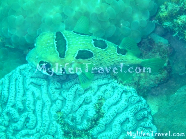 Koh Lipe Diving 39