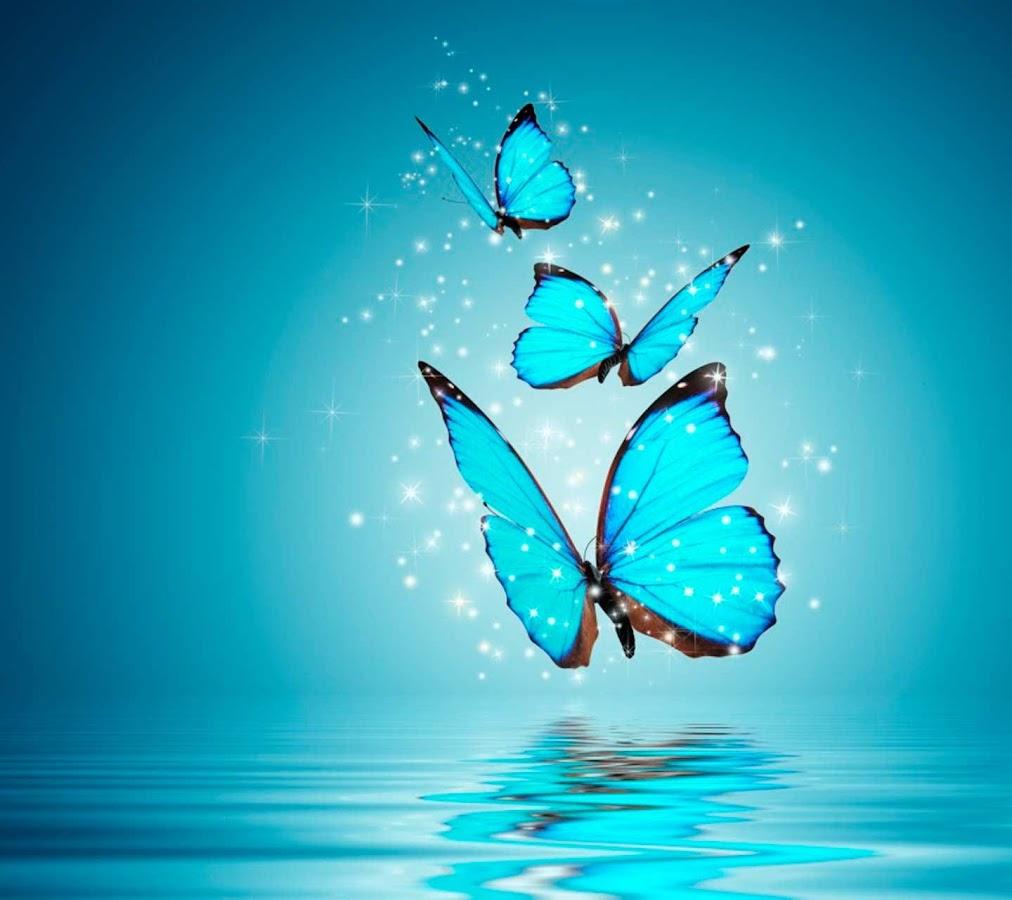 Beautiful flower wallpper dp for whatsapp beautiful flower whats app butterfly wallpapers whats app butterfly wallpapers google beautiful flowers pictures izmirmasajfo