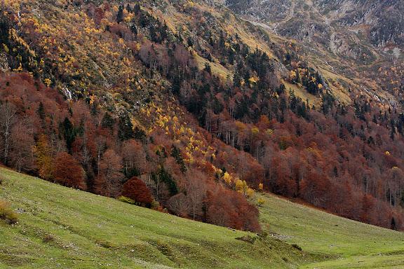 Bosc de tardor a l'Artiga de Lin,Vielha, Val d'Aran, Lleida