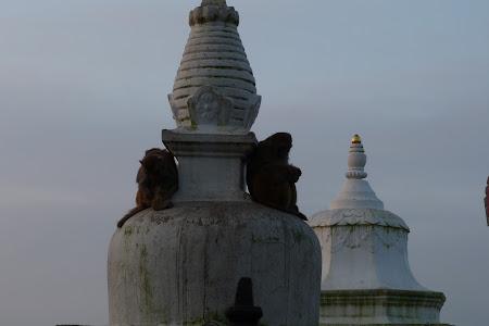 maimute templu