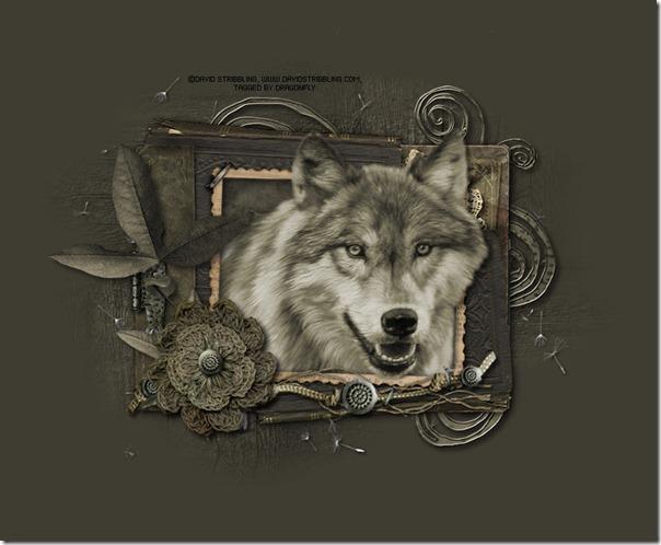 lobos  (14)