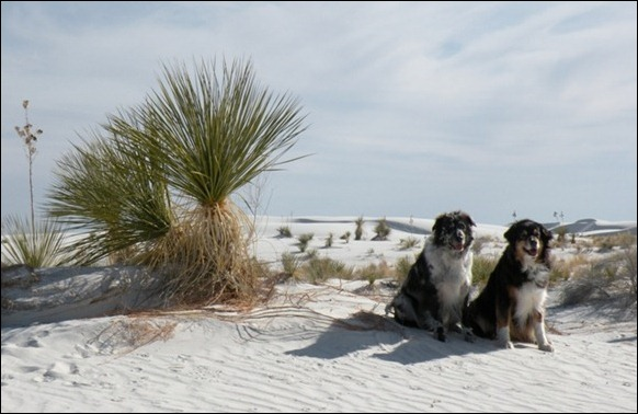 White_Sands_National_Monument_010