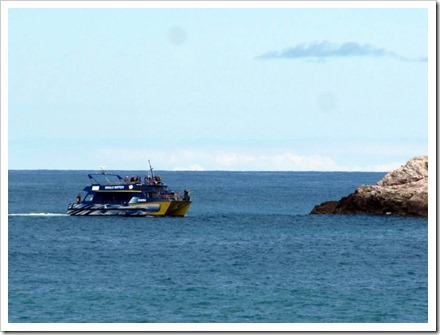 Whale watch boat Kaikoura coming in to view the Seals.