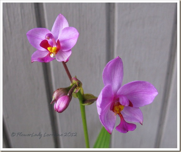12-21-ground-orchids3