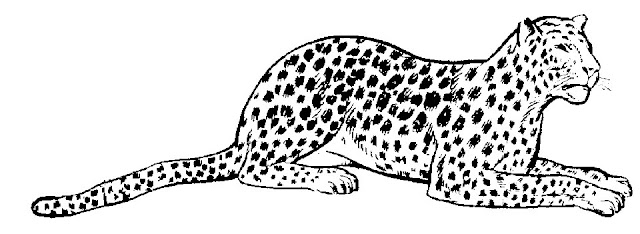 Dibujo Leopardo Para Colorear E Imprimir: Leopardos Para Colorear E Imprimir