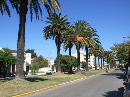 Bulevard cu palmieri in Argentina