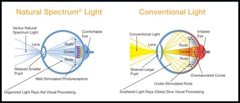 Verilux Lighting and the Human Eye