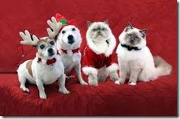 animales navidad (2)