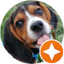 Wonder Beagle Murphy