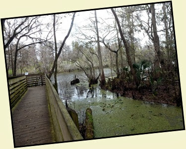 05 - Boardwalk along Hillsborough River