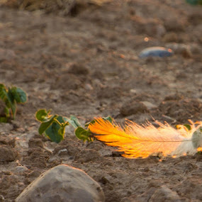 Fire by Jim Anderson - Artistic Objects Still Life ( color, artistic, ground, feather, fire )