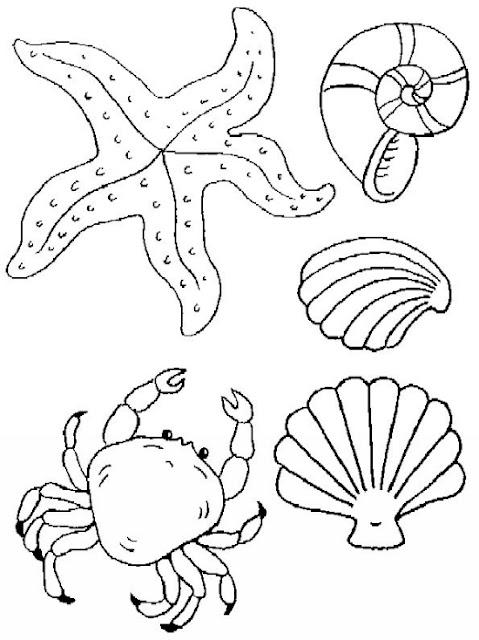 Dibujos Para Colorear Conchas Marinas