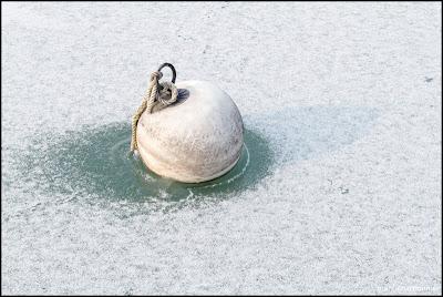 Lac Léman Genève - Glace-18.jpg