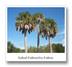 Insect Protection Pest Control Florida S State Tree Palm Mostly Right