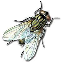 Code con ruồi bò trên blogspot/web- Sưu tầm