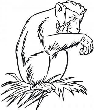 colorear dibujos de chimpances