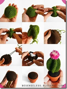 cactus how to