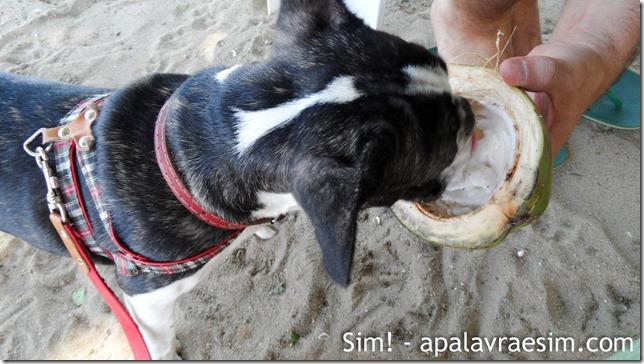 Viagem a Paraty com cachorro viagem hotel restaurantes pet friendly roteiro para viajar com cachorro