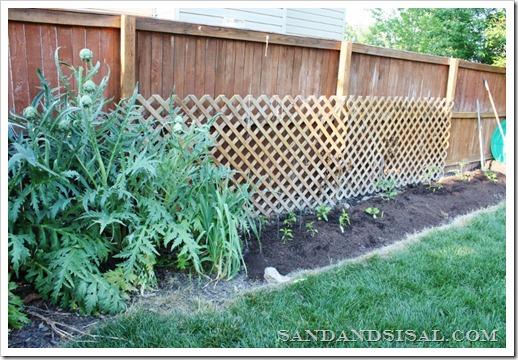 Small space gardening, How to grow an organic garden