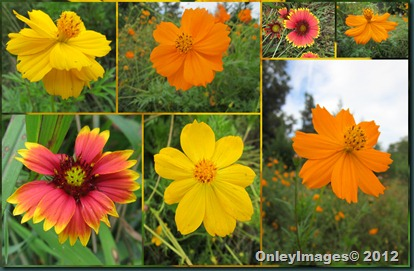 0924 fall flowers collage