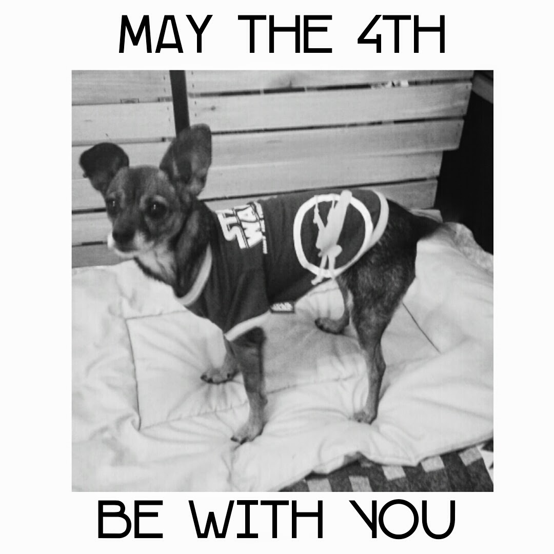 May The 4th Be With You Dog: Dog In The Desert: May The 4th Be With You