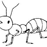 Hormigas Colorear Dibujos