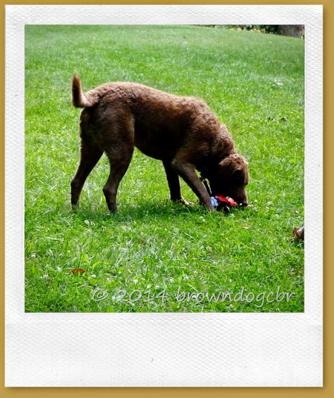 cachet anti tique pour chien