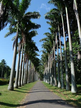Gradina botanica Sri Lanka: alee palmieri