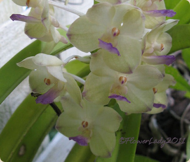 10-22-tiny-orchids-2