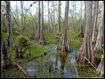 02b - Kirby Storter Boardwalk - Cypress Swamp