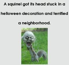 Squirrel Terrifies A Neighborhood By Stucking Head In A Halloween