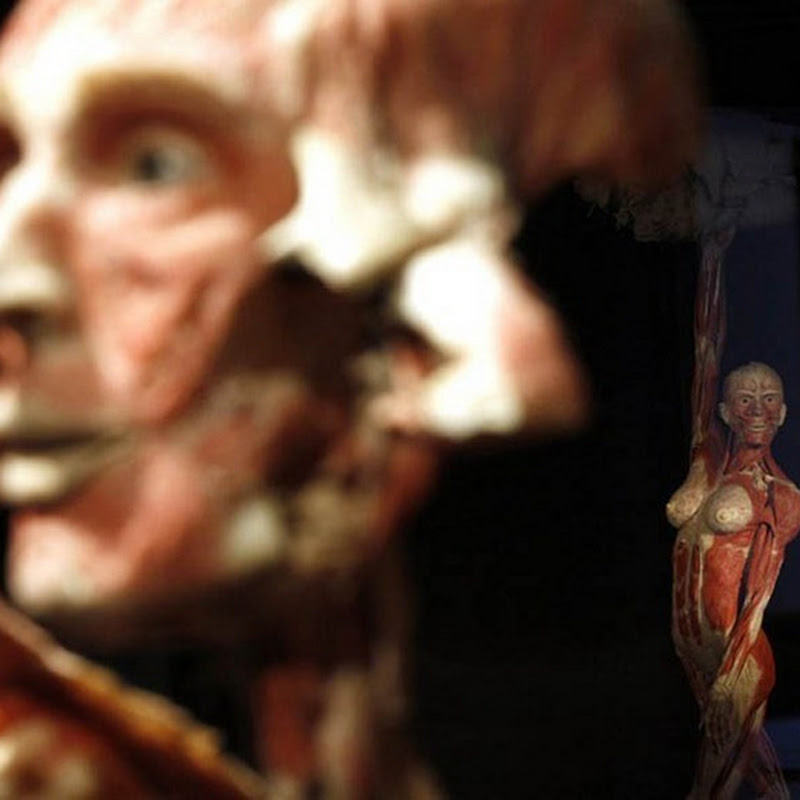 Body World Exhibition in Rome
