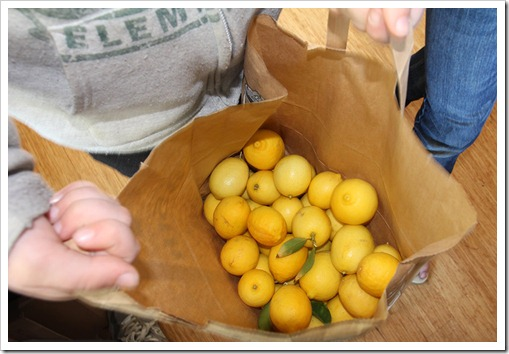 120116_picked_limes
