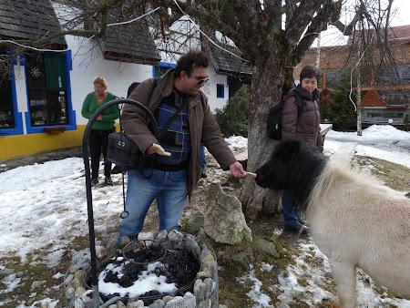 Pensiune Bran: un ponei in curte