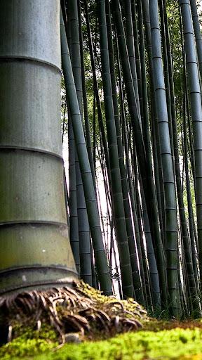 Bamboo Forest Theme