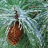 Navidad%2520Fondos%2520Wallpaper%2520%2520454.jpg