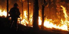 Incendio bosque de pino canario (foto Sal Santos)