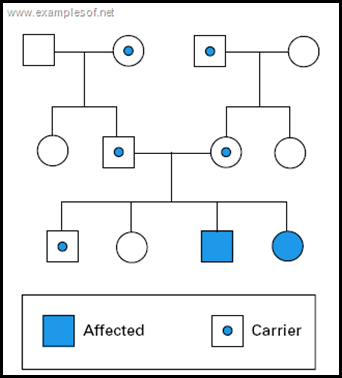 Pedigree chart of Autosomal recessive trait